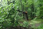 Hasiči při kácení třešně zjistili, že uvnitř je pět malých strakapoudů.