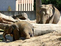 V pavilonu slonů ostravské zoo vládne pohoda.