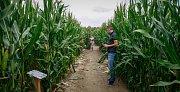 Kukuřičné bludiště u Staré Bělé nabízí asi tři kilometry propletených cest.
