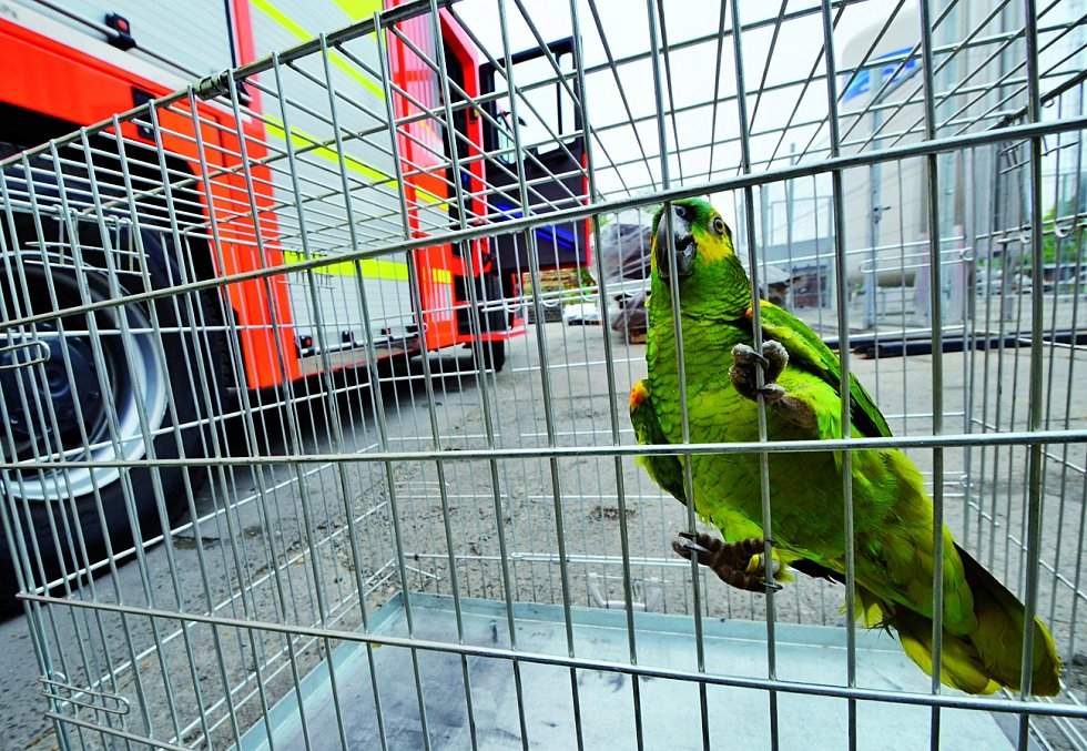 Zachráněný papoušek.