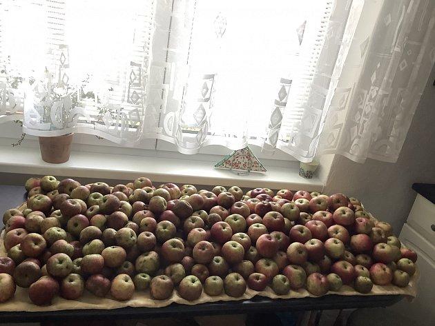 Jablková sklizeň