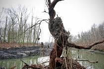 Součástí oživení slepého ramene Odry bude i jeho propojení s řekou a zpřístupnění nově vzniklého ostrova.