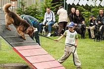 V areálu útulku v Třebovicích se v sobotu uskutečnil už šestnáctý ročník setkání pěstounů útulkových psů.