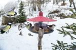 Česko bude sčítat ptáky na krmítku. Pohodlně a bezpečně z domova