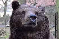 Velké šelmy žijí v Česku volně v přírodě i v soukromých chovech a v Zoo. Ilustrační foto.