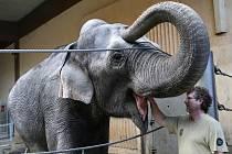 Slon v ostravské zoo.