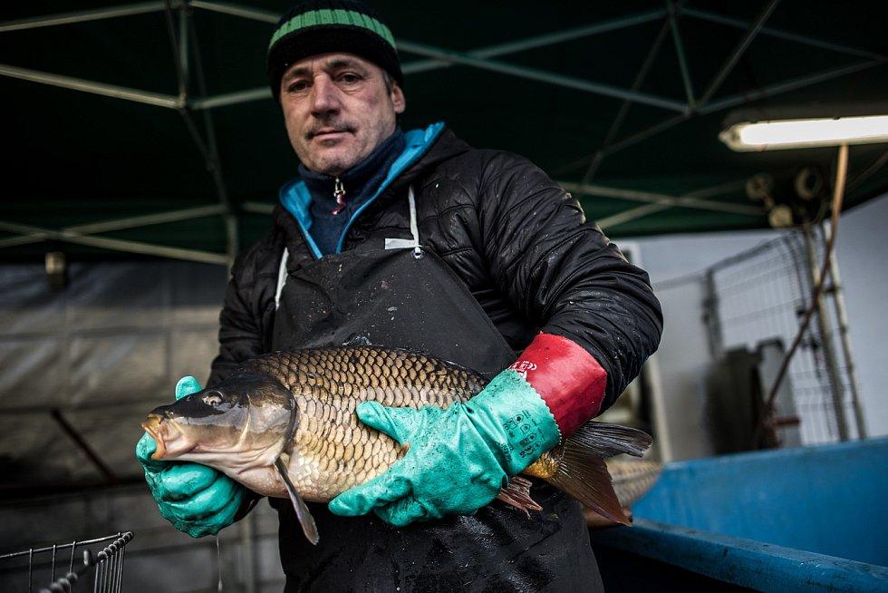 Mezi první prodejce ve městě tradičně patří Zdeněk Nehudek, který má stánek s káděmi plnými ryb u areálu Venuše v Ostravě-Hrabůvce.