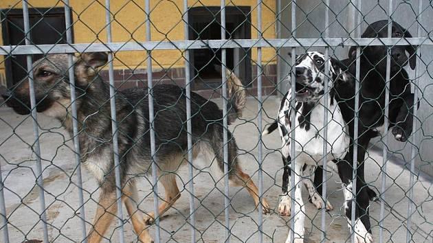Psi, které týrala žena z Vítkovic, našli útočiště v psím útulku