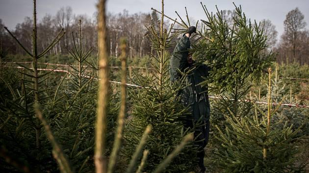 Vánoční stromky. Ilustrační foto.