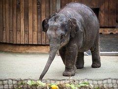 Ilustrační snímek z oslava narozenin zatím nejmladší slonice v ostravské ZOO.