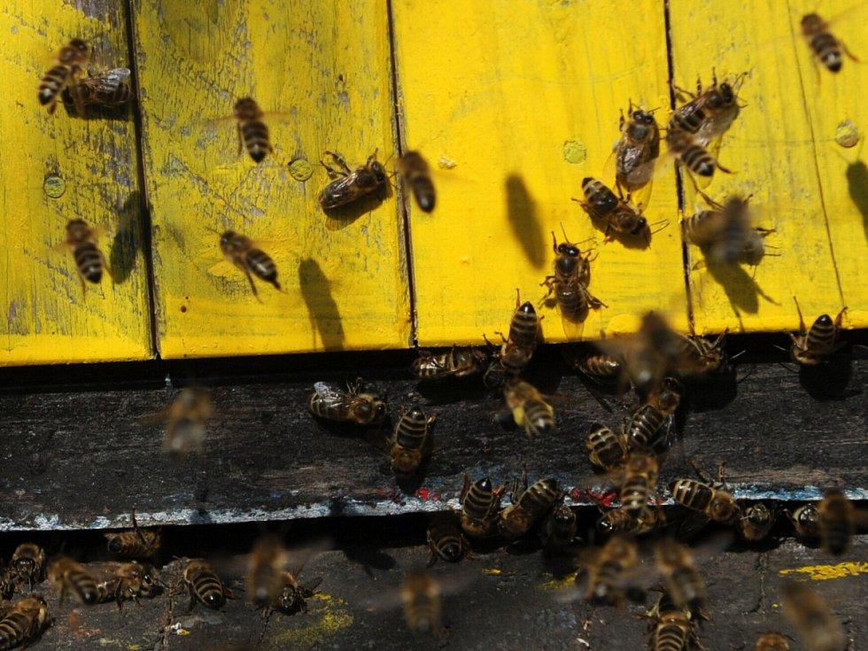 Včely jsou důležití opylovači.