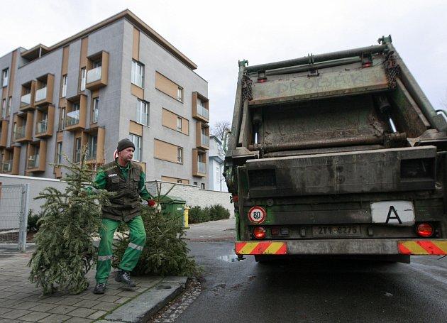Úklid vánočních stromků. Ilustrační foto.
