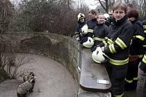 Výcvik hasičů při odchytu zvířat v ostravské zoo.