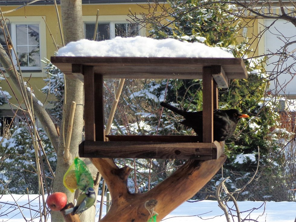 Mrazivá ptačí snídaně
