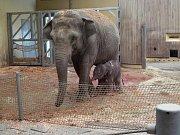 Slonice Vishesh s mládětem.
