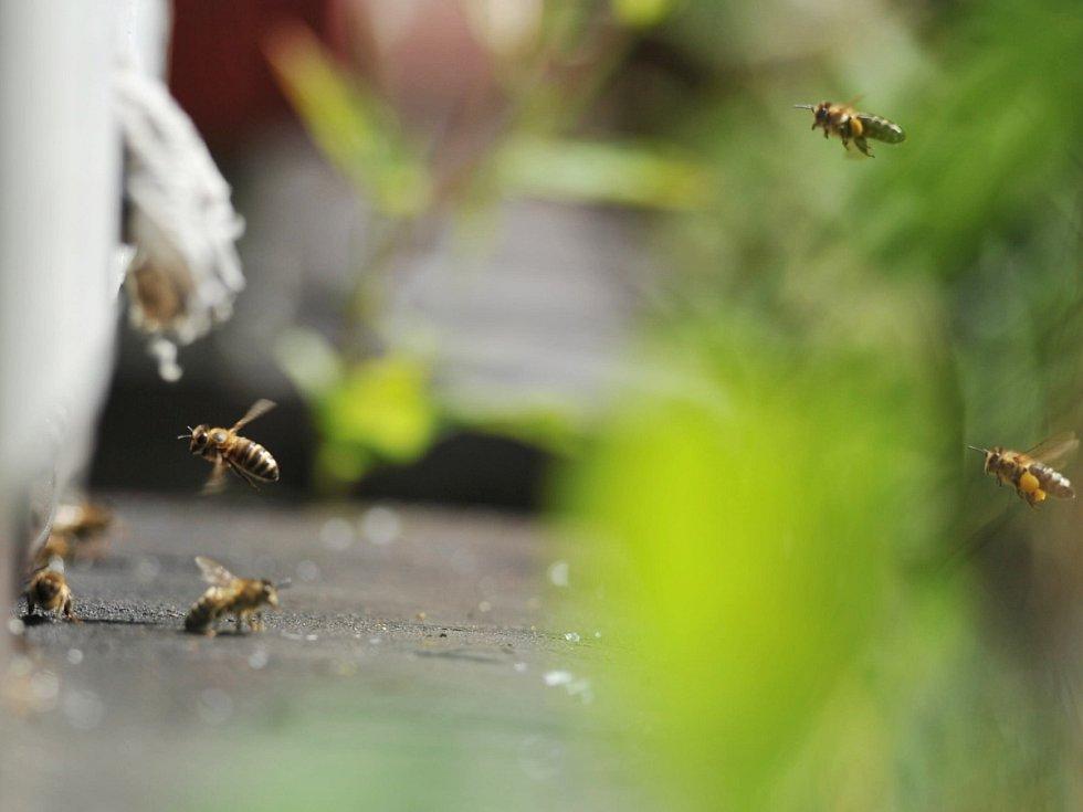 Včely - ilustrační foto.
