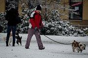 Ostravu v pondělí 28. ledna ráno zasáhlo husté sněžení.