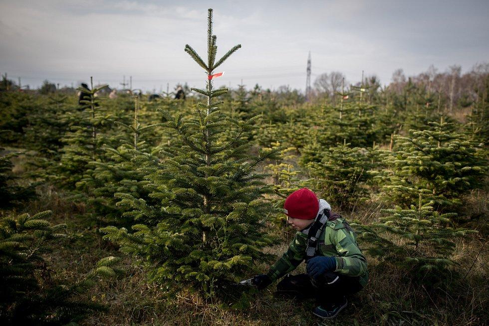 Prodej Vánočních stromečků na plantáži ve Vratimově 1. prosince 2018.