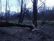 Zásah ostravských hasičů u větrem vyvráceného stromu ve Slezské Ostravě.