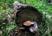 Odstavná parkoviště v Beskydech byla první prázdninový víkend plná aut. Pak už jen stačilo vyrazit do lesa a mít trochu toho houbařského štěstí.