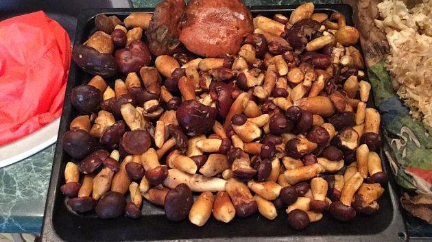 """Hříbečky a oblíbený kotrč delší cestu z Jablunkova """"přežili s mírnými úrazy"""", napsala nám Kateřina Bílská z Havířova k úlovku z 23. září."""