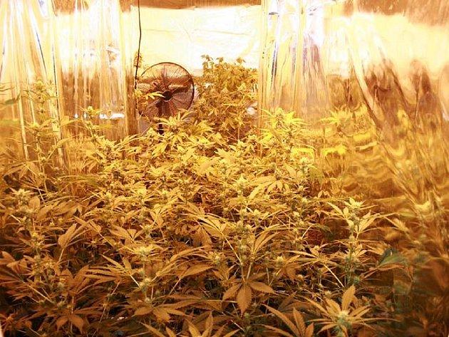 V opavském bytě zajistili padesát rostlin konopí. Na Karvinsku pak odhalili moderně zařízenou pěstírnu konopí.