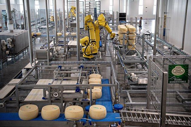 Robotizovaný sklad sklad sýrů společnosti Gran Moravia, 12.srpna 2021vCogollo del Cengio vprovincii Vicenza, Benátsko, Itálie. Roboti bochníky připravují na dřevěné police, ty následně putují do skladu.