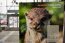 Snímky z výstavy ostravské zoo na vlakových nádražích.