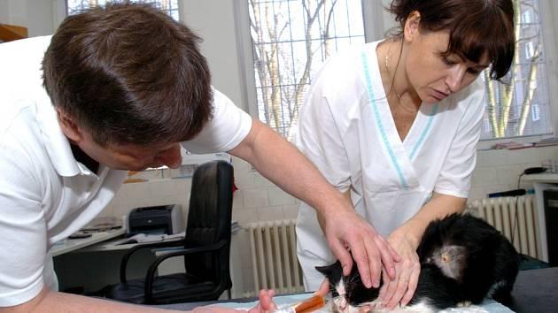 Veterináři během operace vyjmuli z těla kočky čtyři projektily. Jeden z nich zasáhl oko.