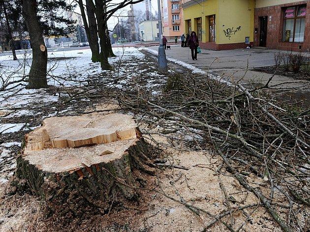 V Porubě se začaly kácet stromy