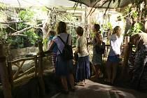 Ostravská zoologická zahrada po rekonstrukci zpřístupnila expozici s názvem Malá Amazonie.