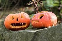 Halloween spojené s dlabáním dýní.