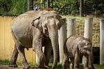 Sloni v ostravské ZOO.