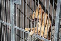 Útulek pro psy v Ostravě je po rekonstrukci.