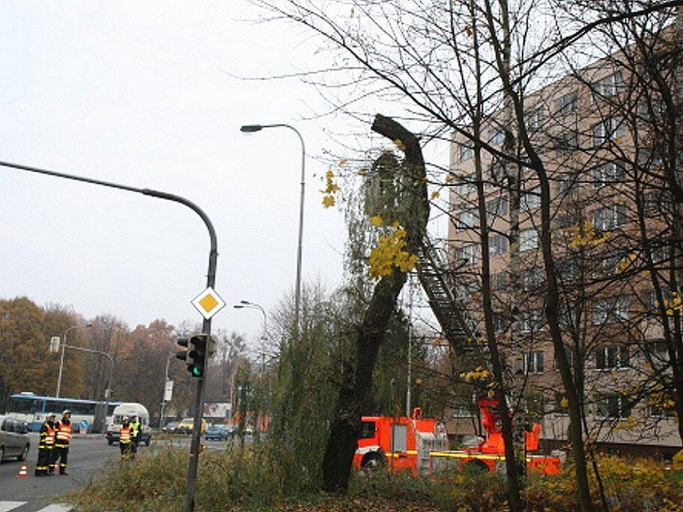Vrbu, jejíž větve hrozily pádem, ořezávali v úterý dopoledne ostravští hasiči. Zasahovali u křižovatky ulic Plzeňské a U lesa nedaleko radnice v městské části Ostrava-Jih.