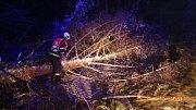 Odstraňování spadlých stromů - Rýmařovsko