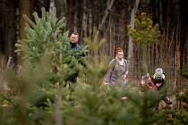 Prodej vánočních stromečků na plantáži ve Vratimově, sobota 7. prosince 2019.