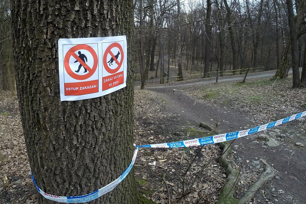 Kvůli divokému praseti musel být havířovský lesopark Stromovka pro veřejnost uzavřen.