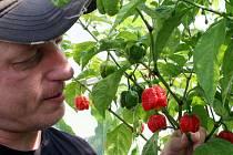 ČERTOVA ZAHRÁDKA. I tak se dá nazvat skleník, kde Aleš (40) z Hrabůvky (na snímku vlevo) pěstuje ty nejostřejší papričky, jaké se doposud na tomto světě vyskytly.