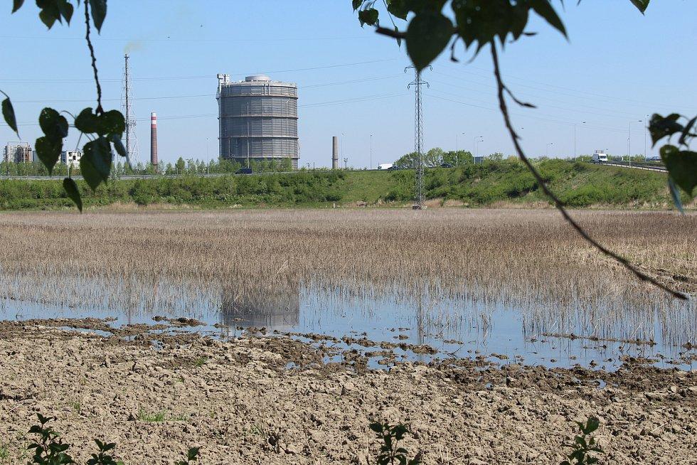 Podmáčené pozemky v Ostravě-Nové Vsi, které společnost Diamo odvodní.