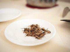 Ochutnávka hmyzích specialit.
