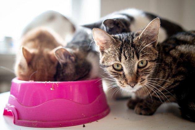 Moravskoslezský spolek na ochranu zvířat buduje azyl pro opuštěné kočky vMariánských horách, 9.března 2020vOstravě.