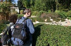 Den zvířat v Zoo Ostrava.
