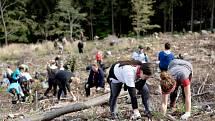Studenti OU pomohou vysadit další nové stromky.