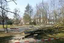 Opilý muž začal v parku plném dětí podřezávat strom. Dílo museli dokončit hasiči.