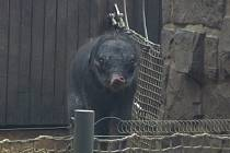 Slůně narozené v ostravské zoo 4. února 2014