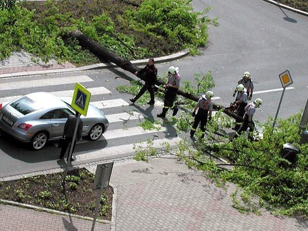 V Porubě vítr vyvrátil před nedávnem napříč Hlavní třídou vzrostlou lípu