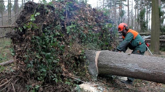 Ostravští lesáci odstraňují v Bělském lese následky sobotní vichřice