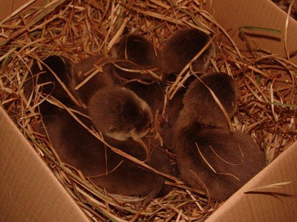 Mláďata vyder malých vostravské zoo.