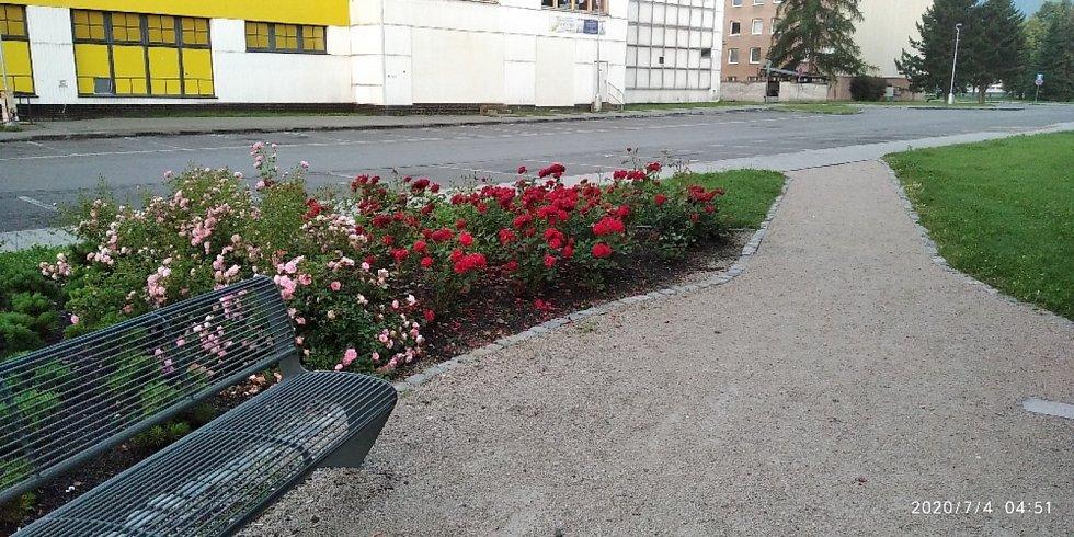 Žena zemřela v růžích, které sama vysadila. Foto: rodina